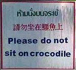 Do not sit on Crocodile
